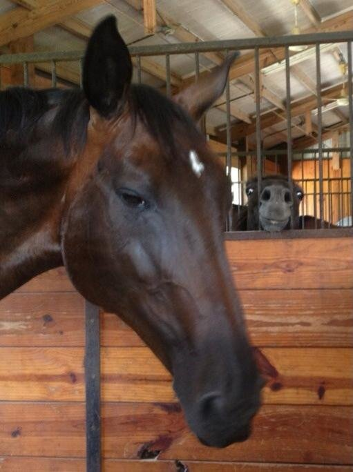 there are two kinds horses world