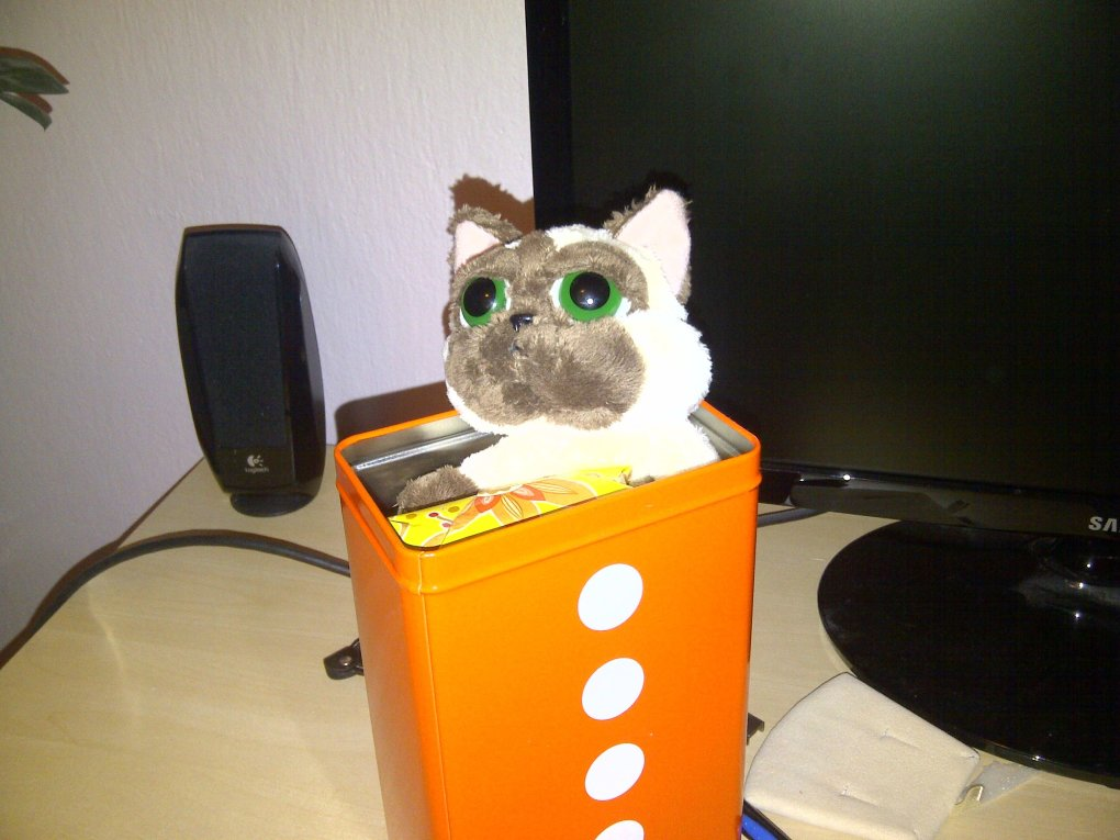 there box without cat