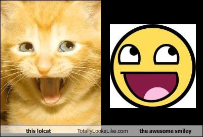lolcat totally looks like awesome smiley
