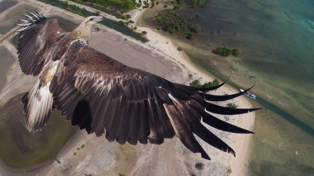 rare close personal shot eagle flight