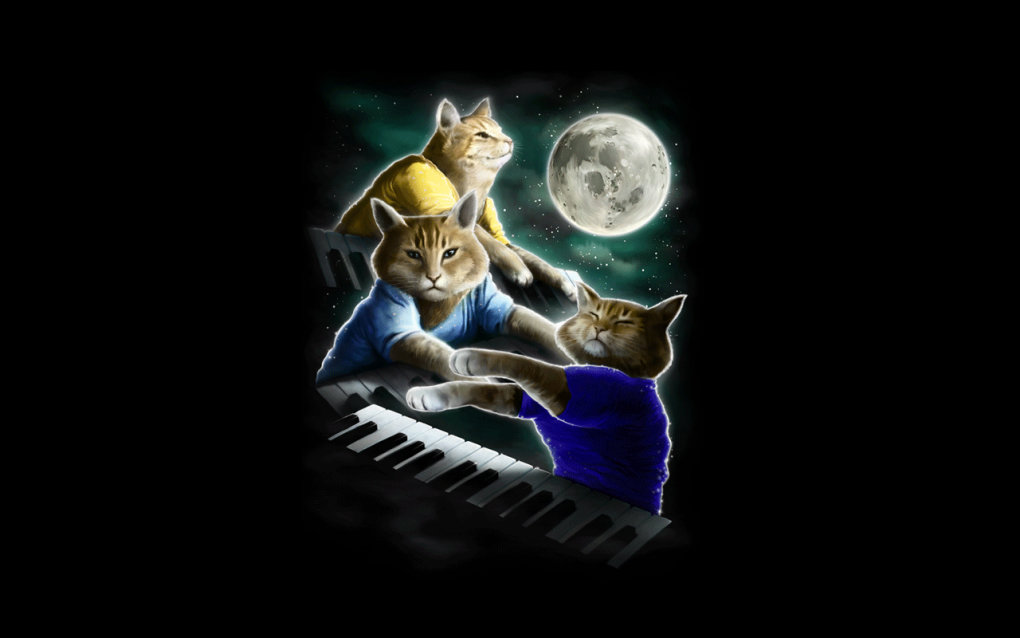 three keyboard cats