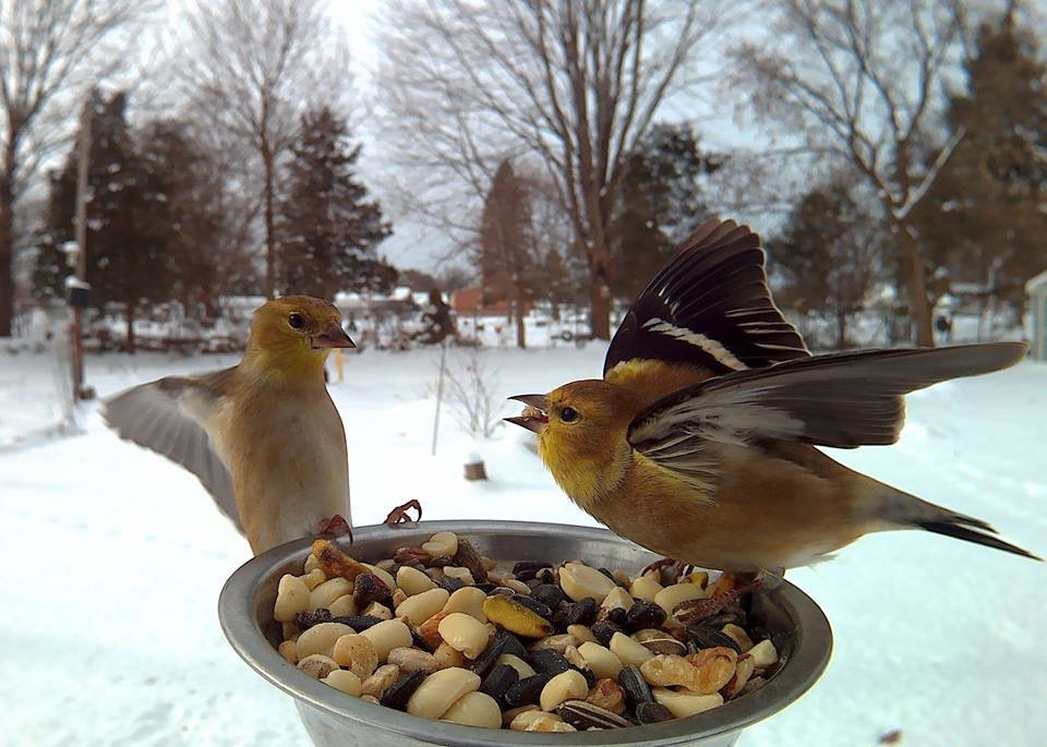 upj7ntm - birds pose for motion-activated camera