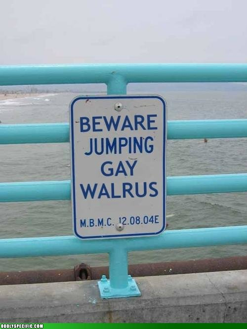 walrus - funny pics from around the web.