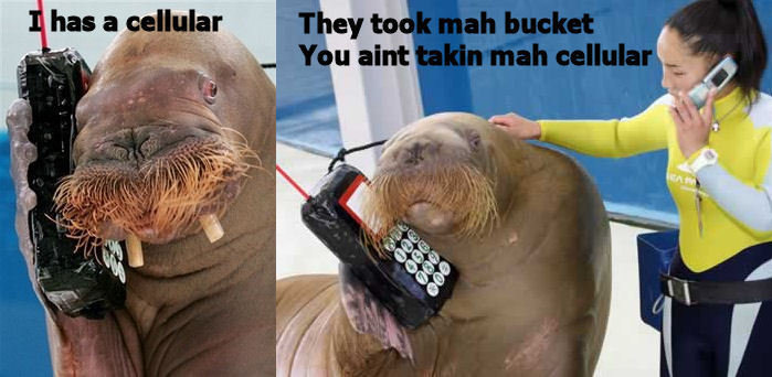 walrusphone - noooo! meh bucket!