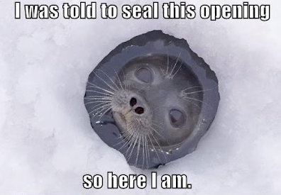 told seal opening