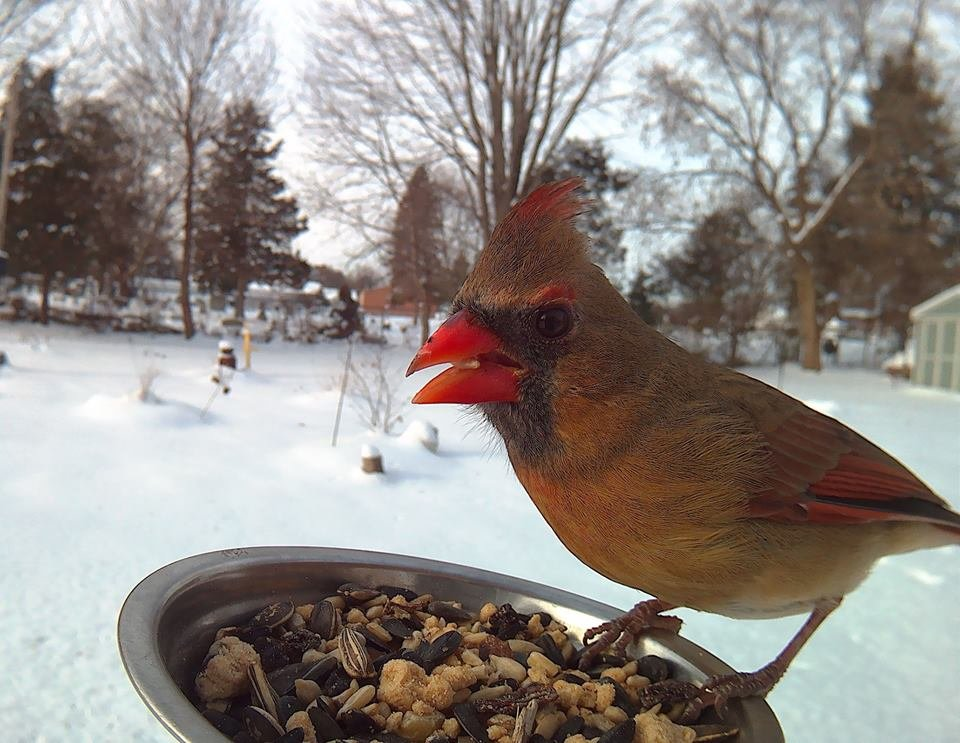 ydyoxvm - birds pose for motion-activated camera
