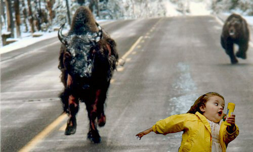 yes thats little girl being chased half mauled bison bear down
