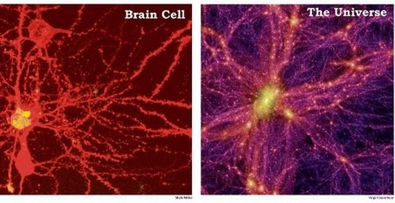 your brain cells universe